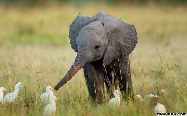 Cute-Baby-Elephant-Animals-Pets