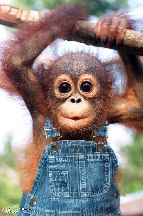 monkey_smile