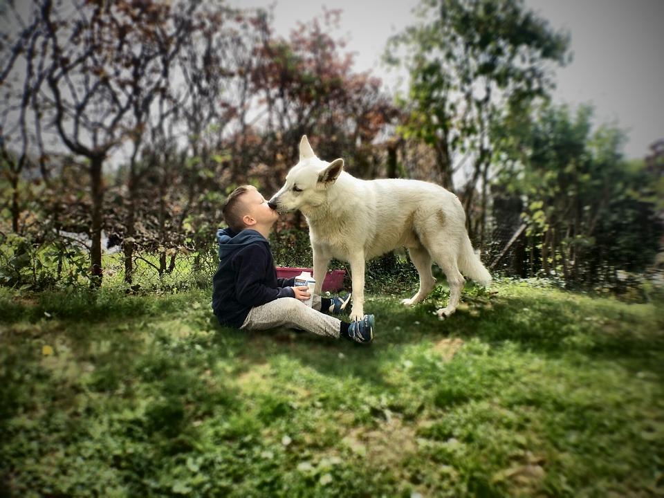 dog kissing a child