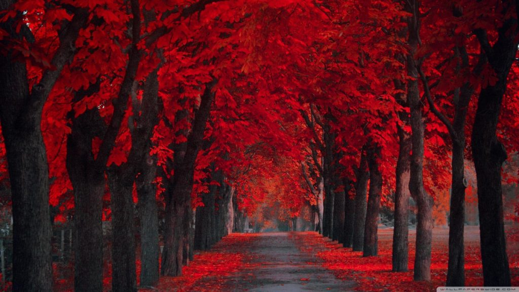 red pathway magical pathways
