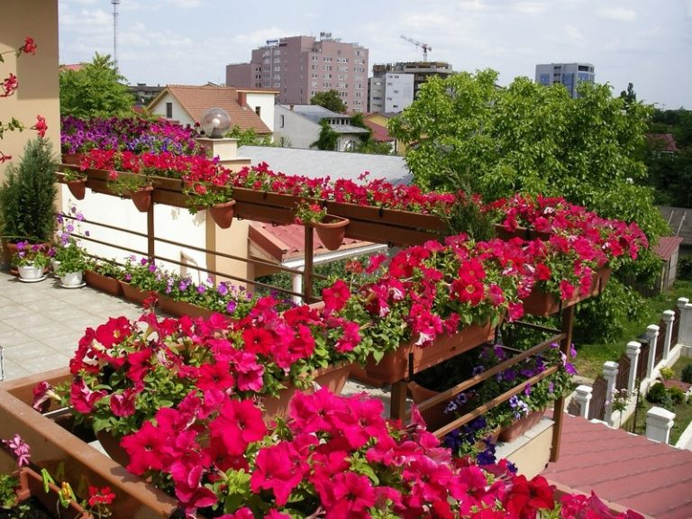 balcony fence with flowers