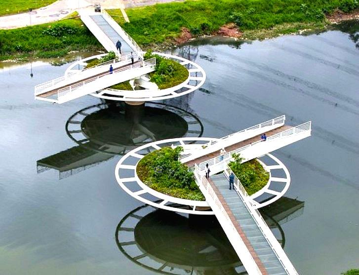 Lush Green Lilypad Bridge