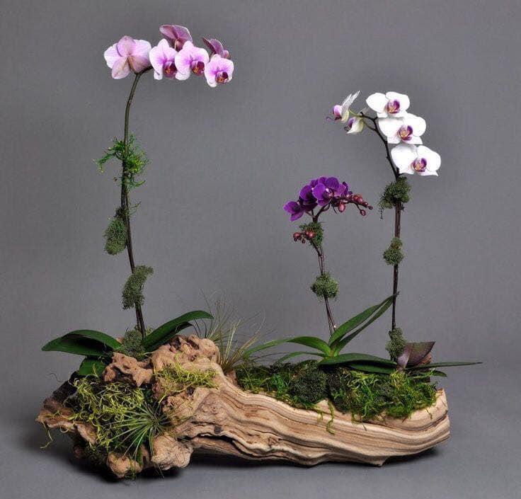 tree sump vases