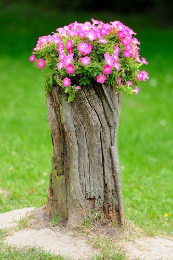 tree stumps reuse
