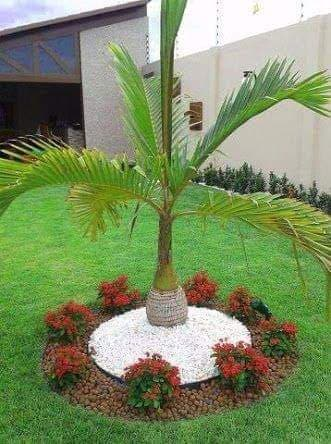 palm tree in garden decor