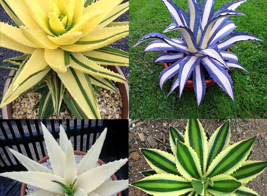 Beautiful Plants That Will Give Life To Your Home!