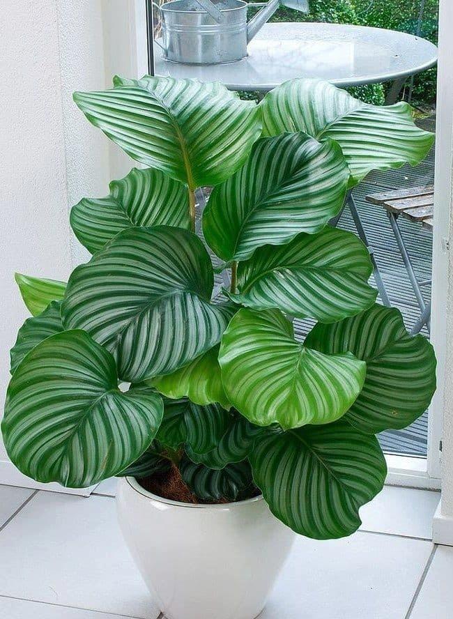 nice plants