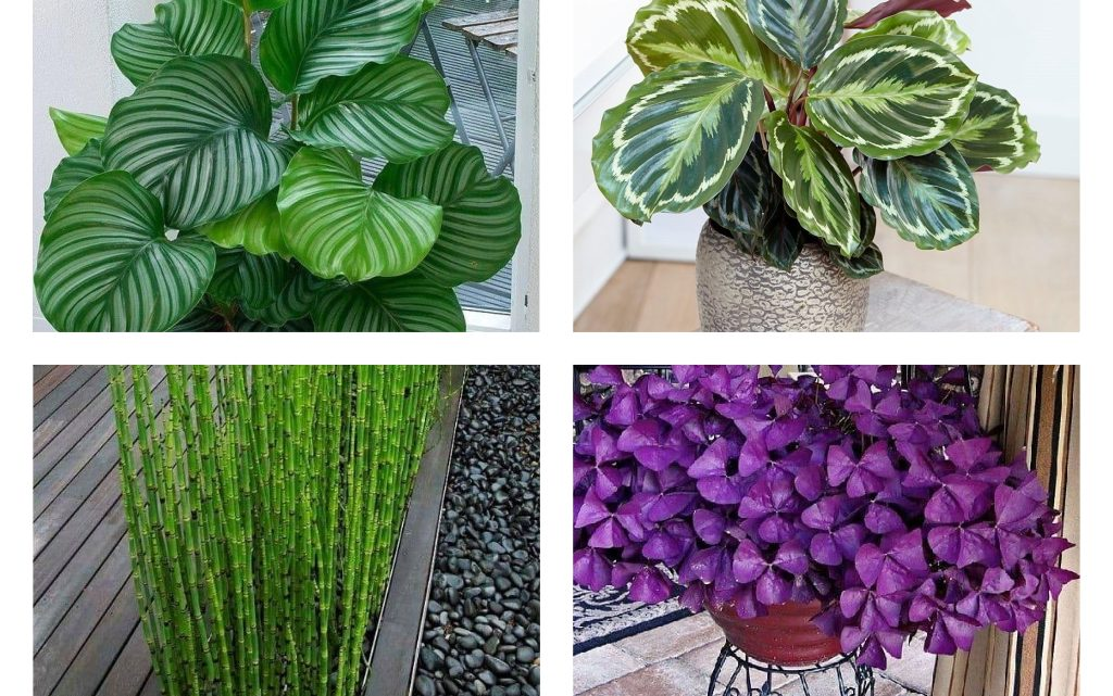 Beautify Your Home With Nice Plants