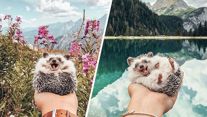 Mountain Adventures of Mr. Pokee, the Hedgehog
