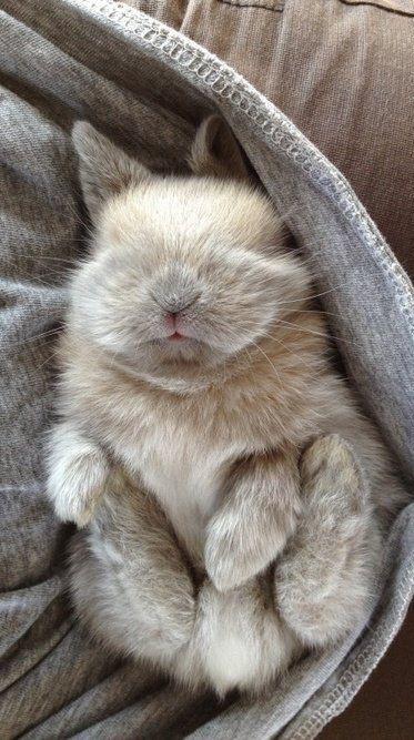 cute little rabbit sleeping