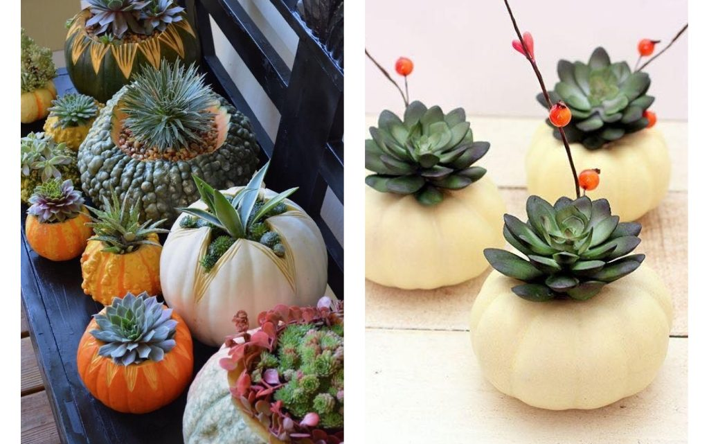 DIY Pumpkin Flower Pot for your Succulents