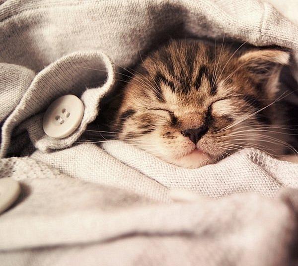 Cute Little Animals Sleeping Photos