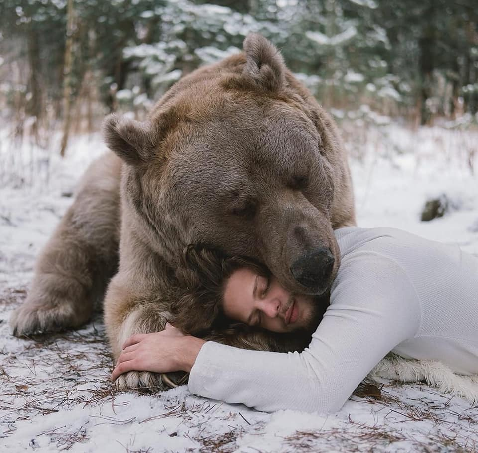 bear and model