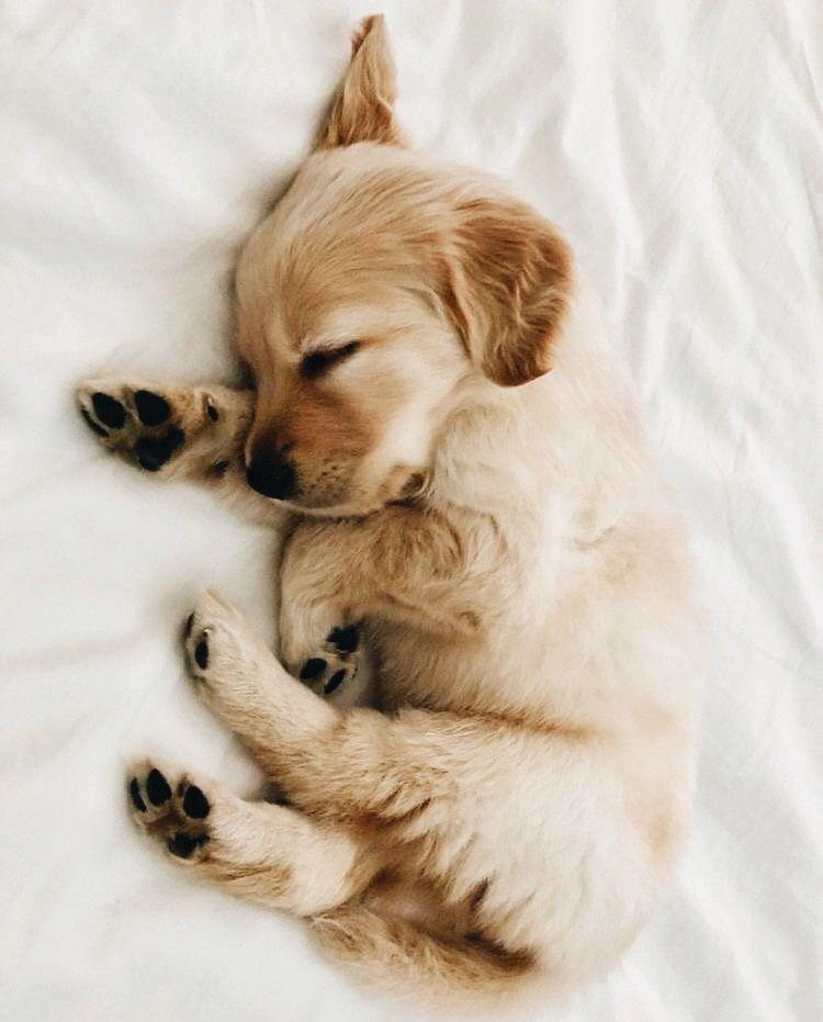 animals sleeping