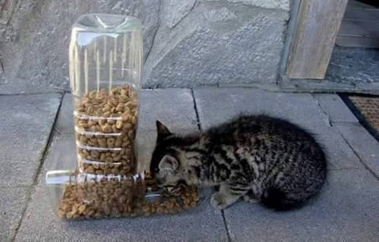 plastic bottles cat feeder