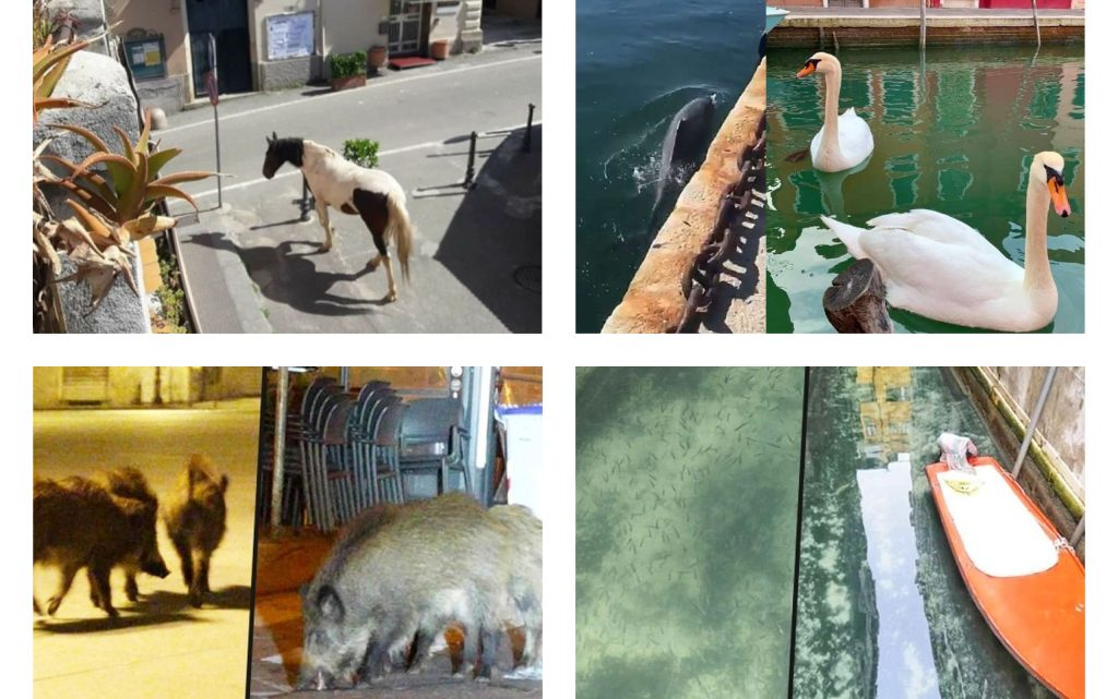 While People Stay Home, Animals are Invading Cities in Italy