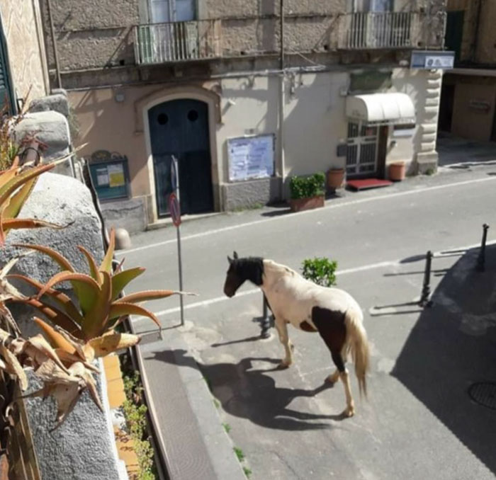 animals in the streets in Italy