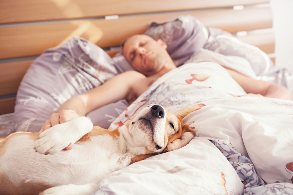 sharing bed with dog