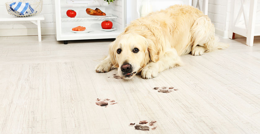 Cleaning House in 5 Minutes Even If you Have a Dog!?