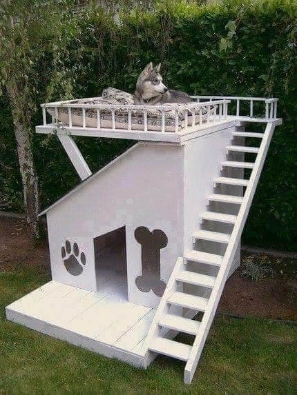 The Coolest Dog Houses