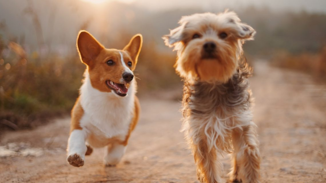 Top Tips on Getting the Best Tick Treatment For Your Dogs