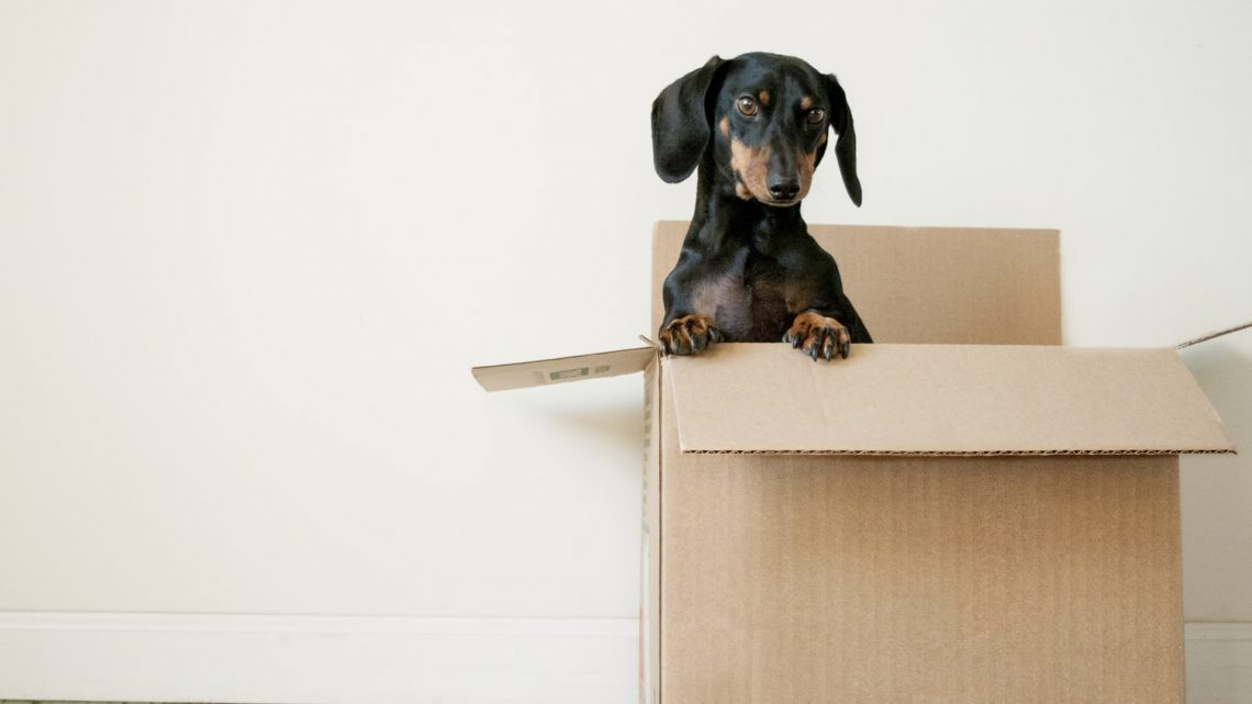 The Most Common Things People Forget While Moving